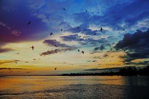 Фото бесплатно восход солнца, море, птицы