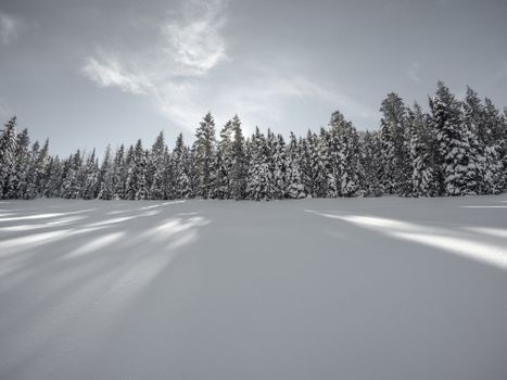 Photo free tree, forest, snow