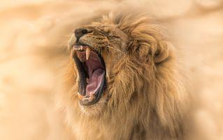 Заставки Зев, зубы животных, животные