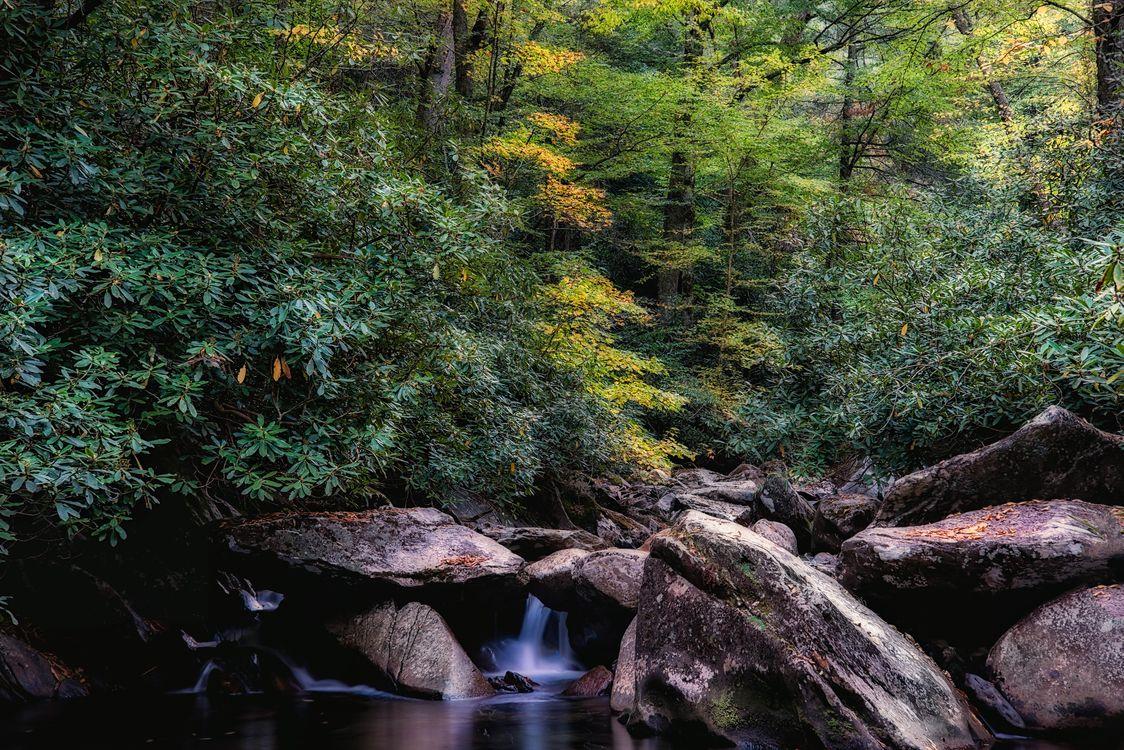 Обои осень, лес, водопад картинки на телефон