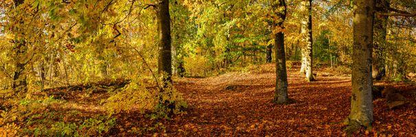Фото бесплатно панорама, осенний лес, осень
