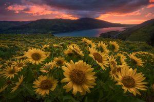 Бесплатные фото Ровена,Восход в Орегоне,горы,озеро,цветы,пейзаж