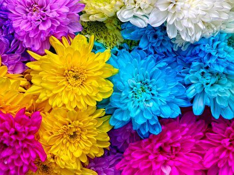 Photo free chrysanthemum, floral, macro