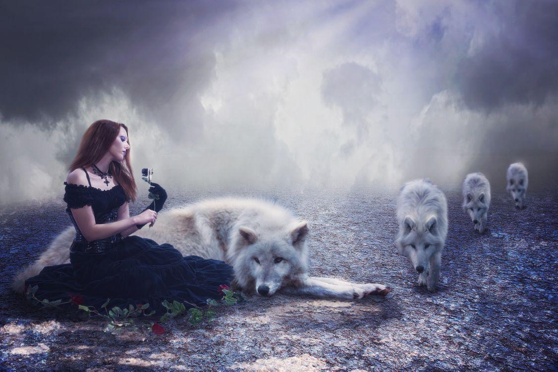 Фото бесплатно девушка и волки, девушка, стая волков - на рабочий стол