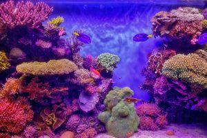 Фото бесплатно морской аквариум, кораллы, рыбы