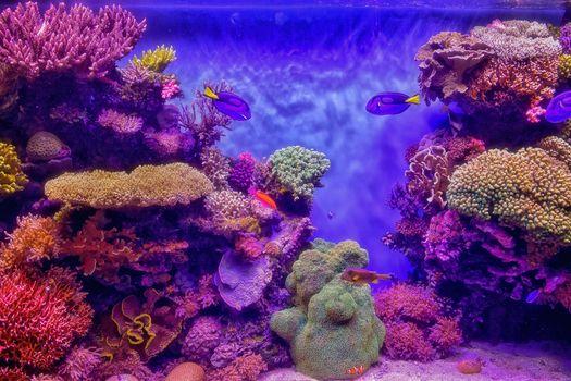 Заставки морской аквариум, кораллы, рыбы