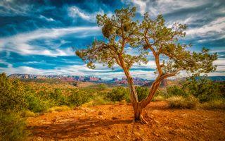 Бесплатные фото Sedona,Arizona,горы,небо,облака,дерево,природа