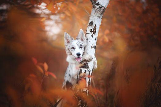 Photo free pet, posing, dog