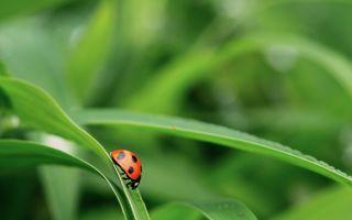 Photo free ladybug, macro, nature