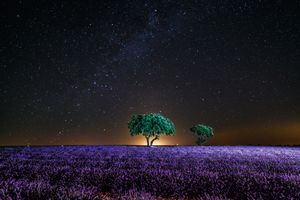 Photo free night, the Milky Way, lavender