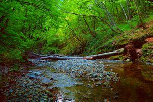 Фото бесплатно волшебная река, деревья, лес
