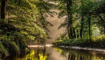 Фото бесплатно парк, река, старые деревья