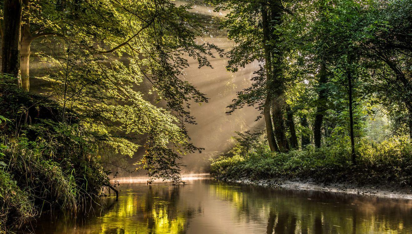 Фото бесплатно парк, река, старые деревья - на рабочий стол