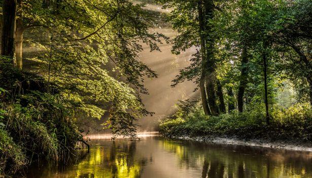 Заставки парк, река, старые деревья