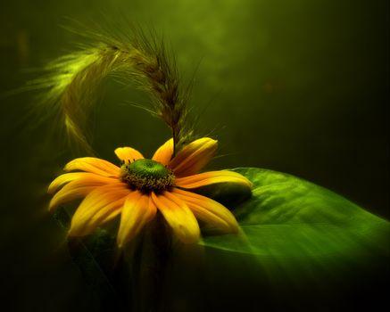 Бесплатные фото цветок,лист,флора,зелёный,растение