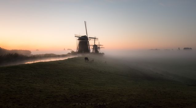 Photo free mills, fog, dawn