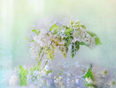 Photo free background, flower, still life