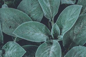Фото бесплатно листья, макро, свежие
