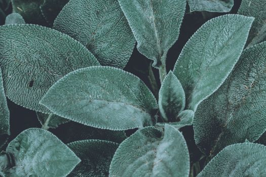 Photo free leaves, macro, fresh