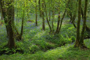 Фото на телефон лес, цветы