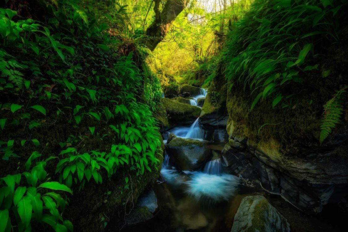 Фото бесплатно деревья, лес, поток - на рабочий стол