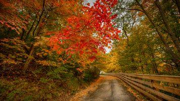 Заставки осень, дорога, парк