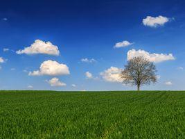 Фото бесплатно трава, небо, пейзаж