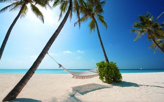 Photo free ocean, palms, hammock
