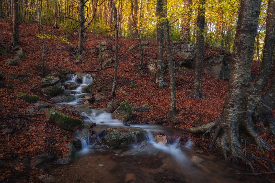 Родник в лесу · бесплатное фото