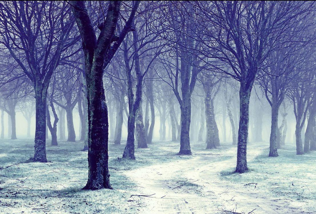 Фото бесплатно пейзажи, деревья, зима - на рабочий стол