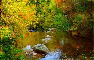 Фото бесплатно пейзаж, волшебная река, лес
