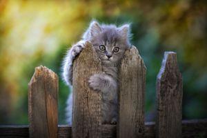 Заставки котенок, забор, ограждение