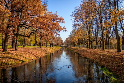 Ducks in the autumn pond · free photo