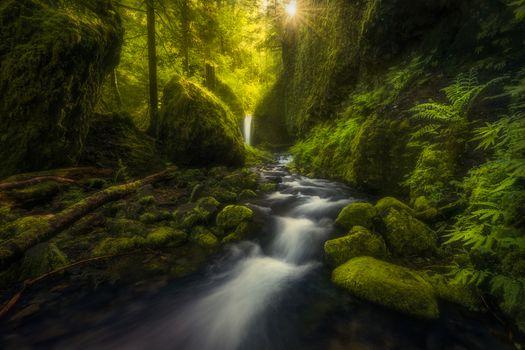Бесплатные фото Пышная зелень ущелья реки Колумбия,река,мох,камни,водопад,деревья,природа,пейзаж