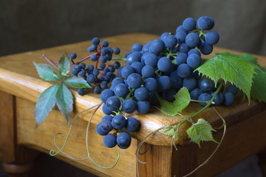 Grapes Isabella · free photo