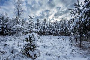 Фото бесплатно зима, ели, снег, деревья, природа, пейзаж