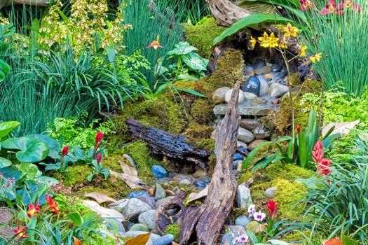 Бесплатные фото Longwood Gardens Tropical Orchid Garden,Сад тропических орхидей Лонгвуд садов,Сады Лонгвуда,цветы,камни,коряга,растения,флора,ручей,орхидеи,природа