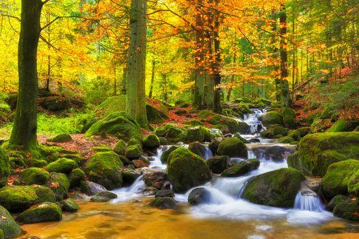 Заставки осенние цвета, осень, мох