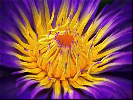 Фото бесплатно цветочная композиция, цветы, макро