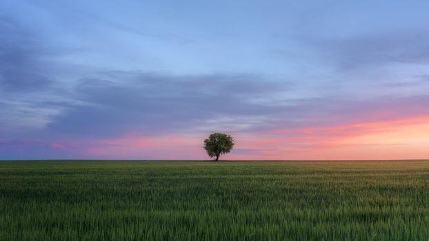 Бесплатные фото закат,поле,дерево,небо,пейзаж