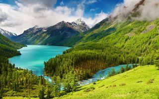 Фото бесплатно облака, хвойное дерево, лес