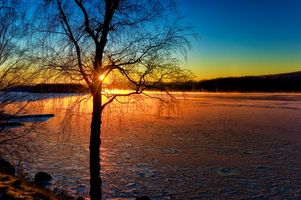 Photo free River Angerman, trees, Kramfors