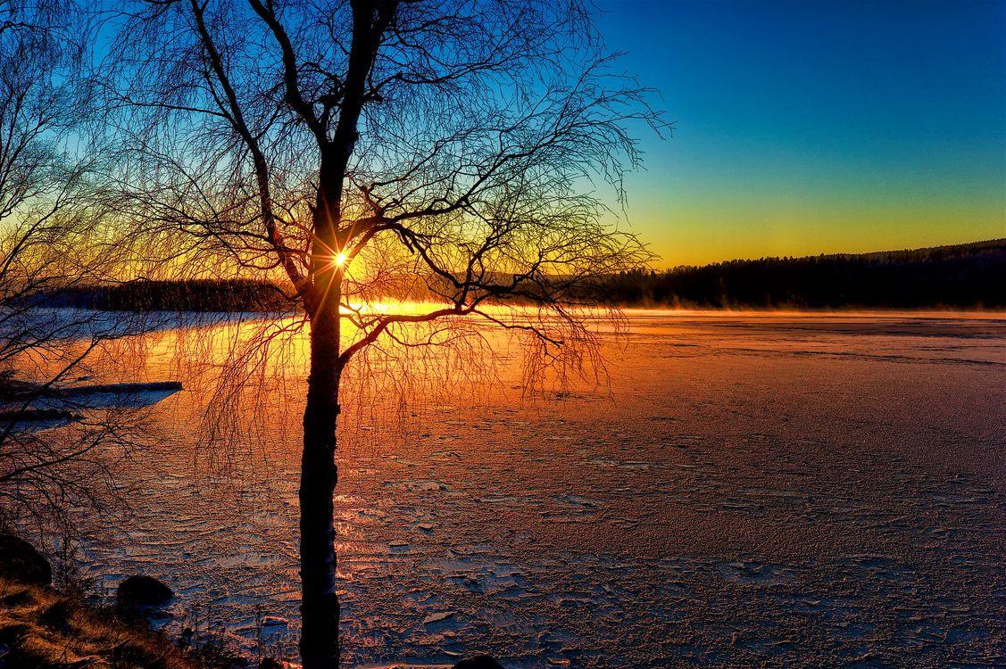 Фото бесплатно Река Ангерман, Крамфорс, Швеция закат, деревья, небо, природа, пейзаж, пейзажи