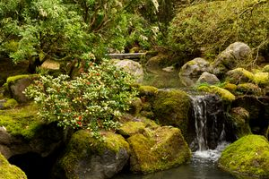 Фото бесплатно Сады, Водопады, Камни, Мох, Кусты, Природа