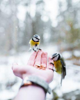 Photo free savage, magical, birds