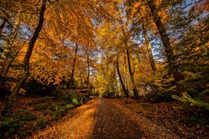 Бесплатные фото Амерсфорт,Нидерланды,парк,осень,лес,деревья,дорога