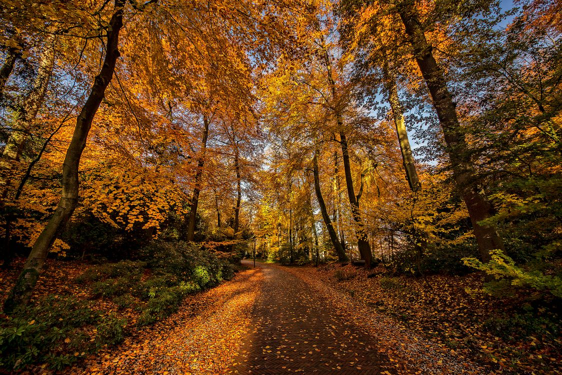 Фото бесплатно Амерсфорт, Нидерланды, парк, осень, лес, деревья, дорога, пейзаж, пейзажи