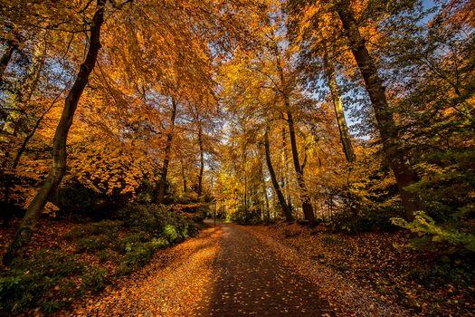 Photo free trees, forest, Amersfoort