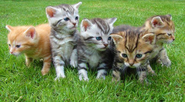 Заставки котята, кошка, кошки щенок