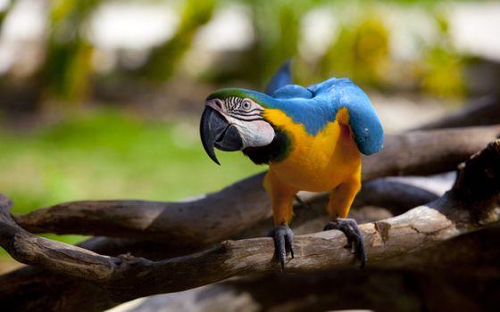 Фото бесплатно попугай, дерево, стоя